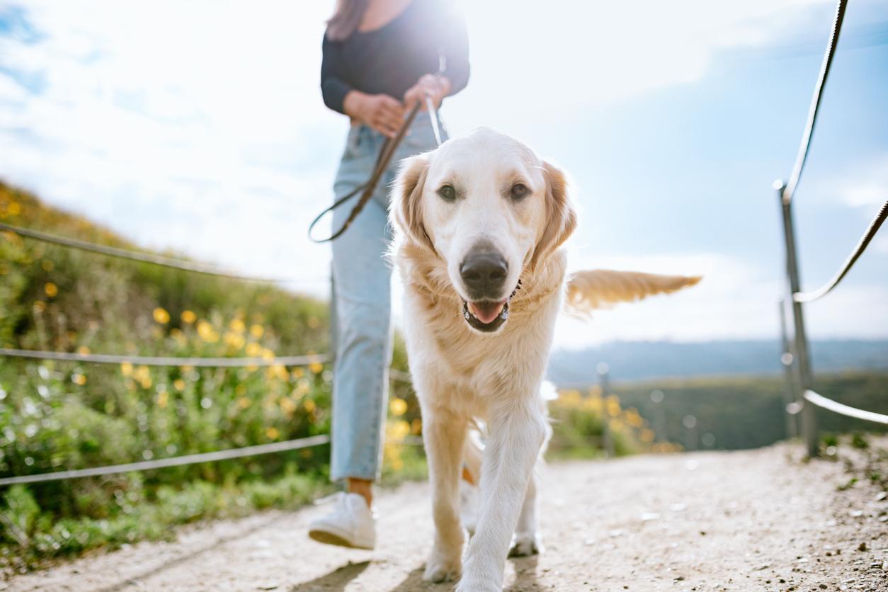 Ihr Hund möchte draußen herumtoben und Artgenossen treffen - gehen Sie mit ihm auf einen abenteuerlichen Spaziergang!