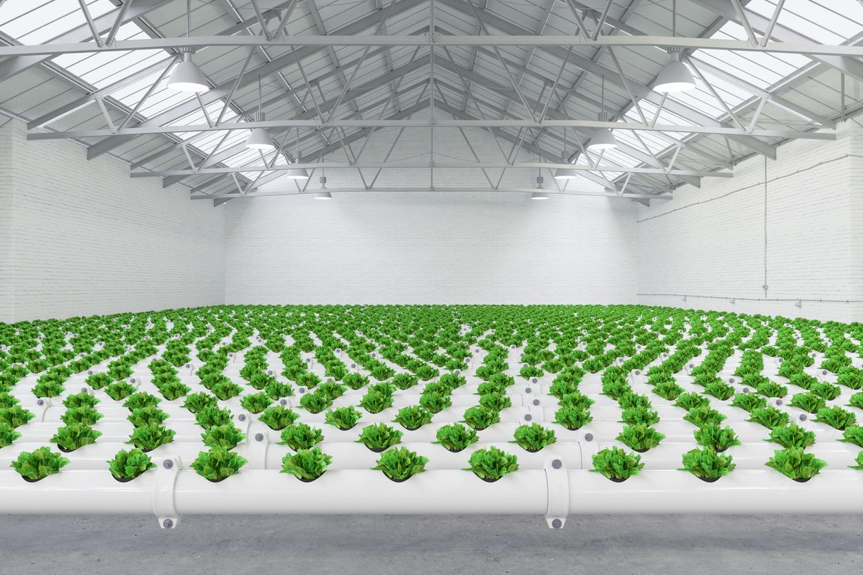 Beim Gemüseanbau spielt die Hydroponik eine große Rolle.