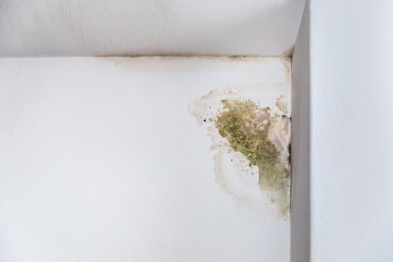 Über den Keller gelangt Schimmel auch in andere Räume und kann Krankheiten auslösen.