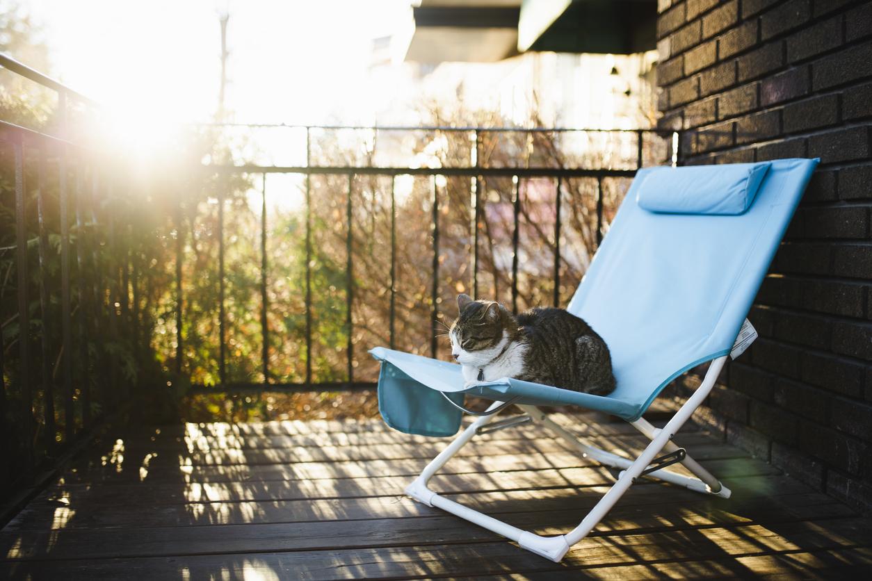 Wenn Sie Ihrer Katze eine besondere Freude machen wollen, können Sie auf dem Balkon eine Katzenwiese anbringen.