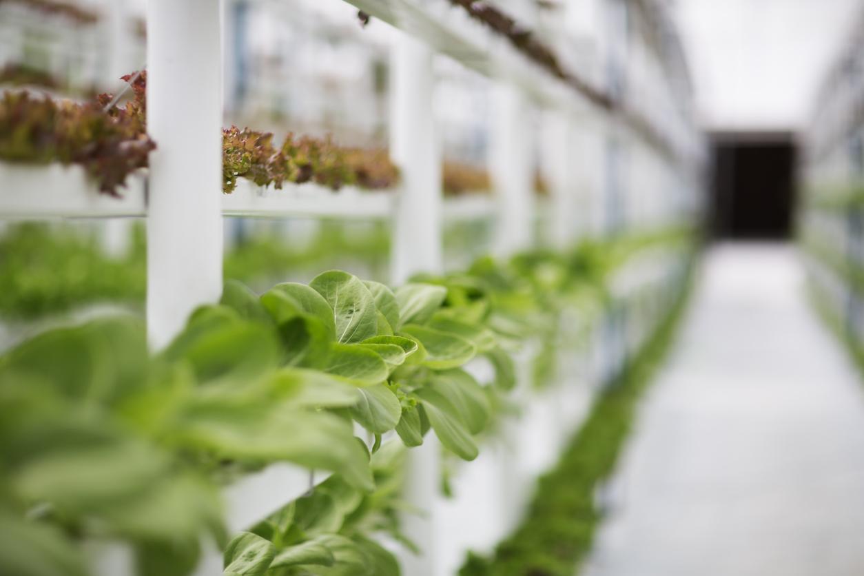 Beim Vertical Farming als Form von Hydroponic wird sehr platzsparend gepflanzt.