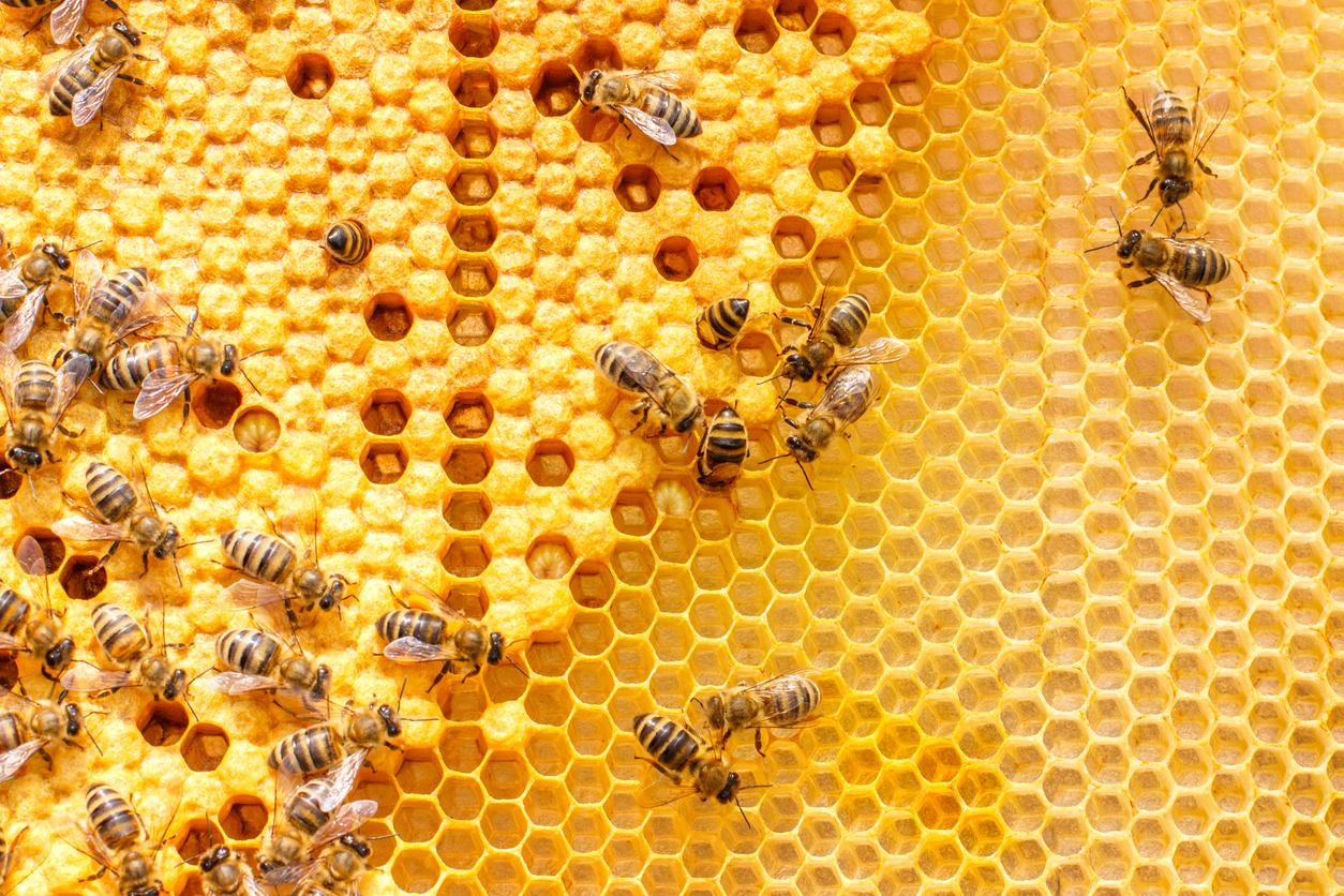 Bienen produzieren gesunden Honig. Um an ihn heranzukommen, bedarf es einer guten Hobby-Imker-Grundausstattung.