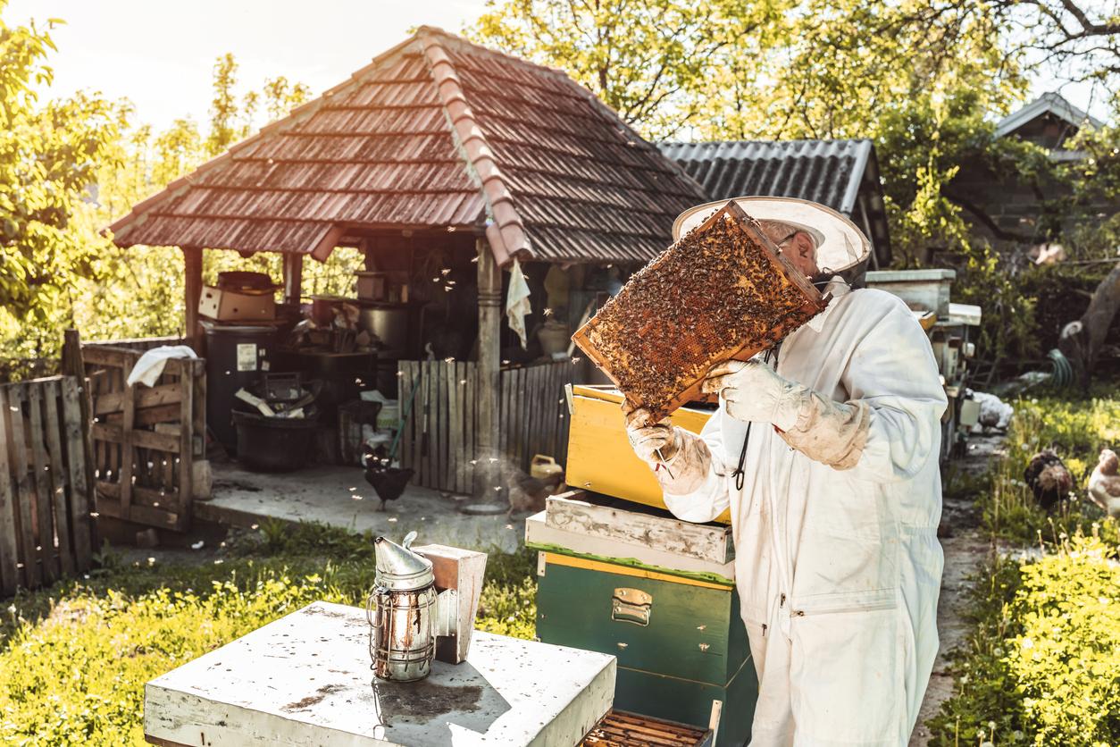 Bienen im eigenen Garten zu halten, geht mit viel Verantwortung einher, kann aber auch große Freude bereiten.
