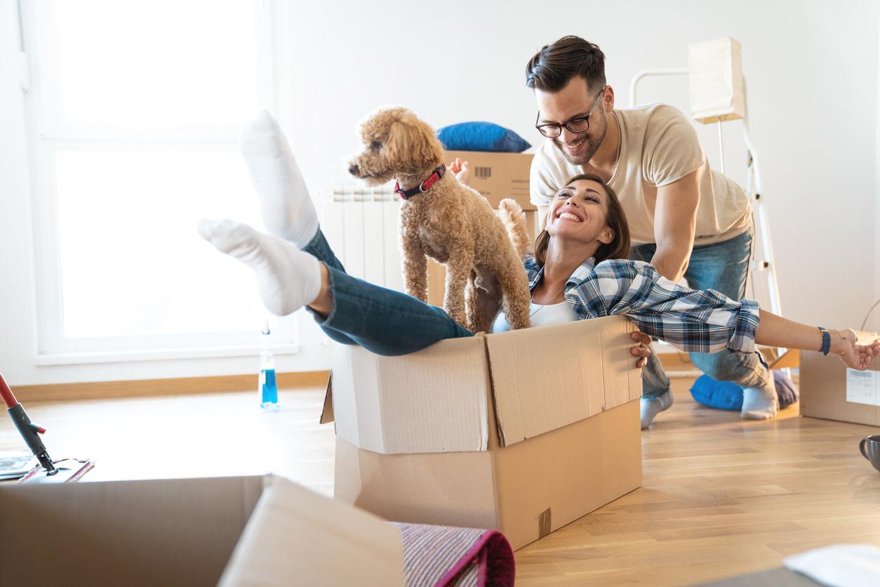 Auch große Hunde können mit der richtigen Fürsorge in einer Wohnung gehalten werden.