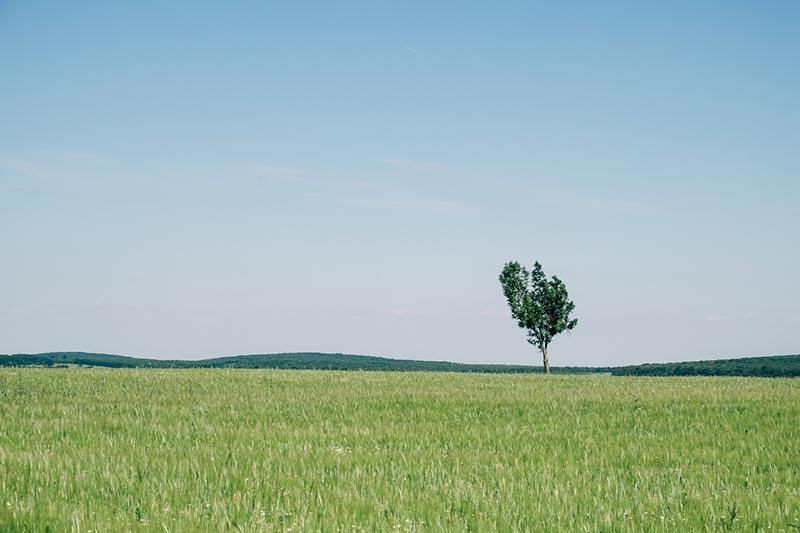 Grundsteuer berechnen: Unbebautes Grundstück