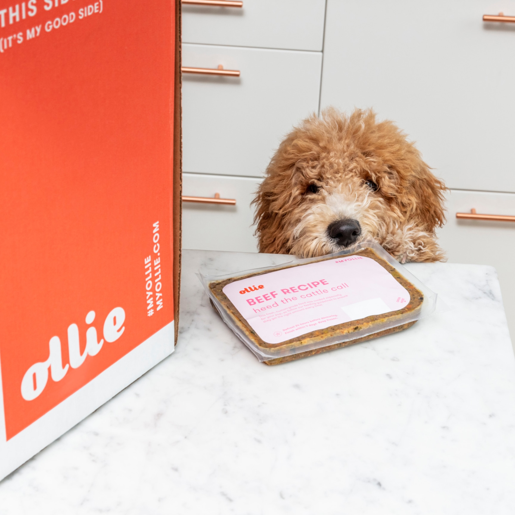 Dog leaning on edge of counter looking at a pack of Ollie