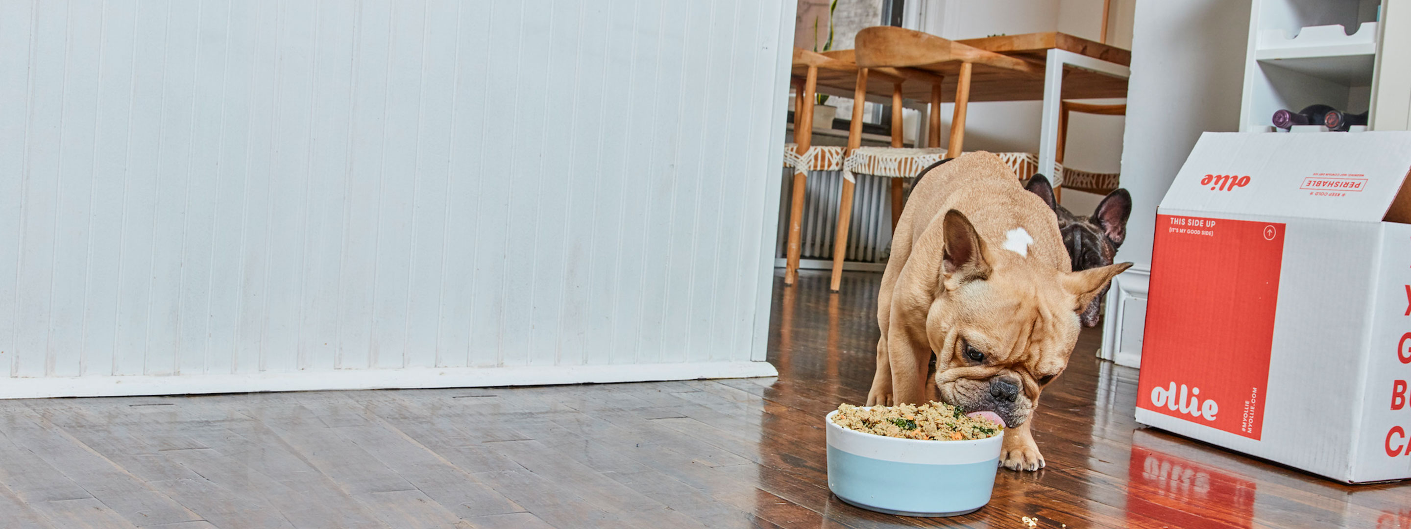 A dog eating a bowl of Ollie's fresh food.