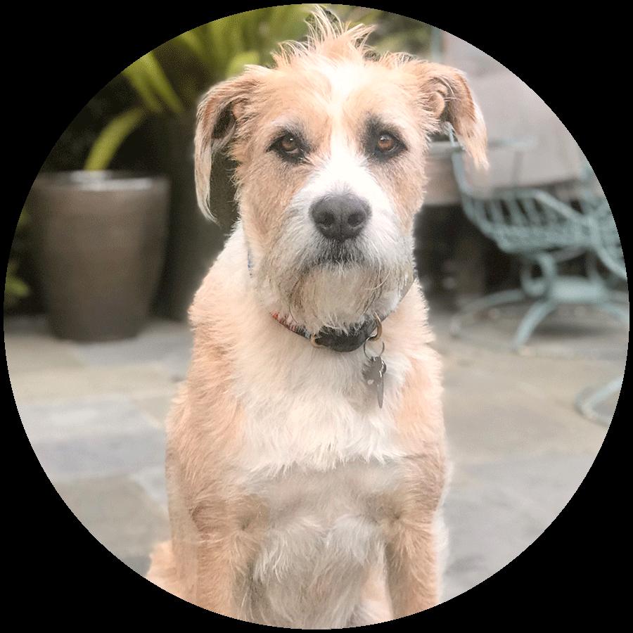 A close-up of a customer's dog named Stella.