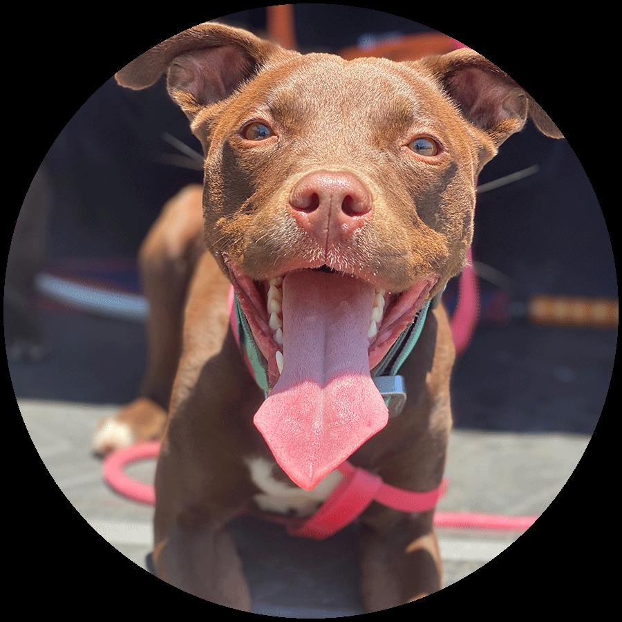 A close-up of a customer's dog named Bear.