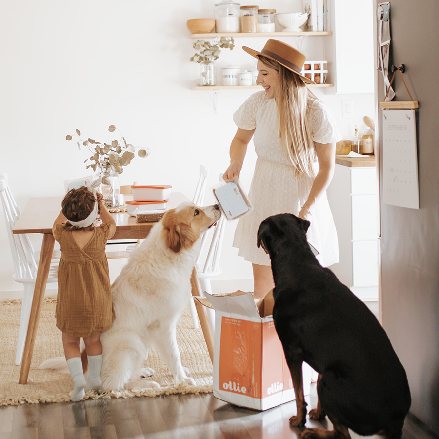 A mother and child in a kitchen opening a box of Ollie with two curious dogs peering over.