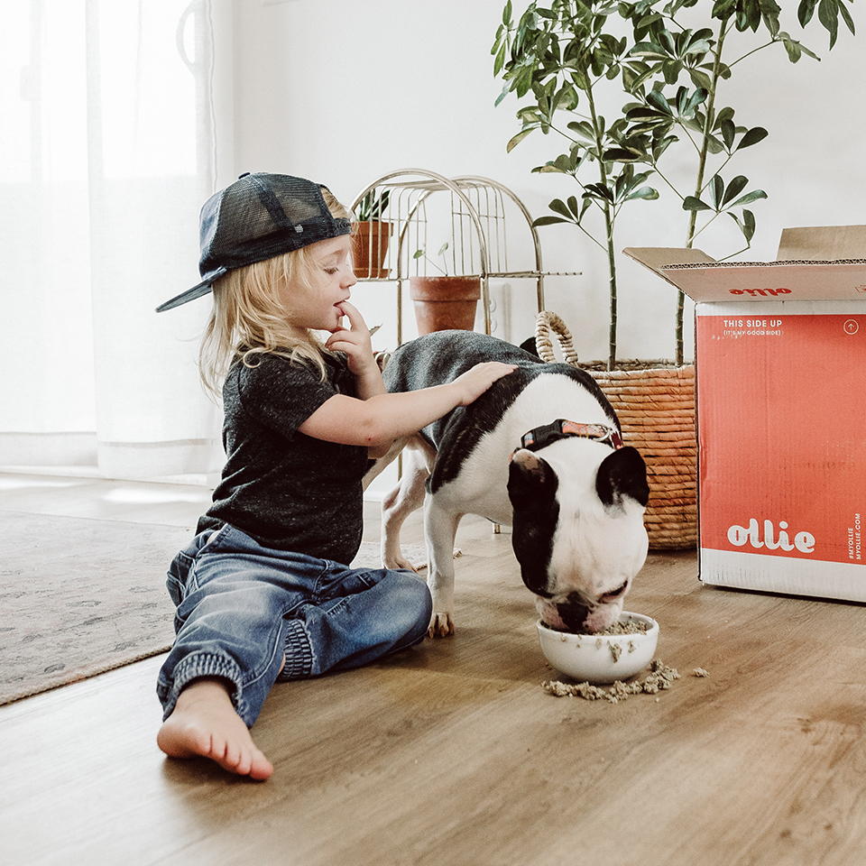 Boy petting a french bulldog that's eating a bowl of fresh Ollie dog food.