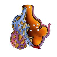 Verteilung in der Lunge Vorschau