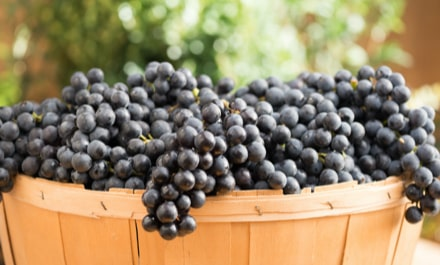 Basket of Concord Grapes