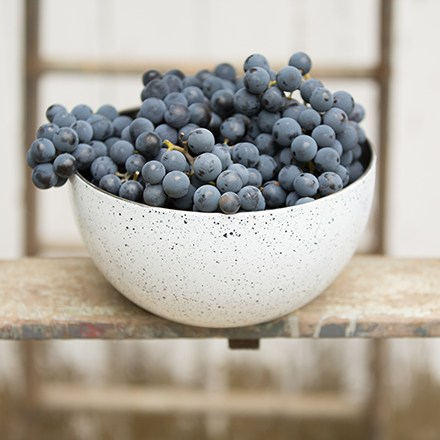 Speckled bowl overflowing with Concord grapes.