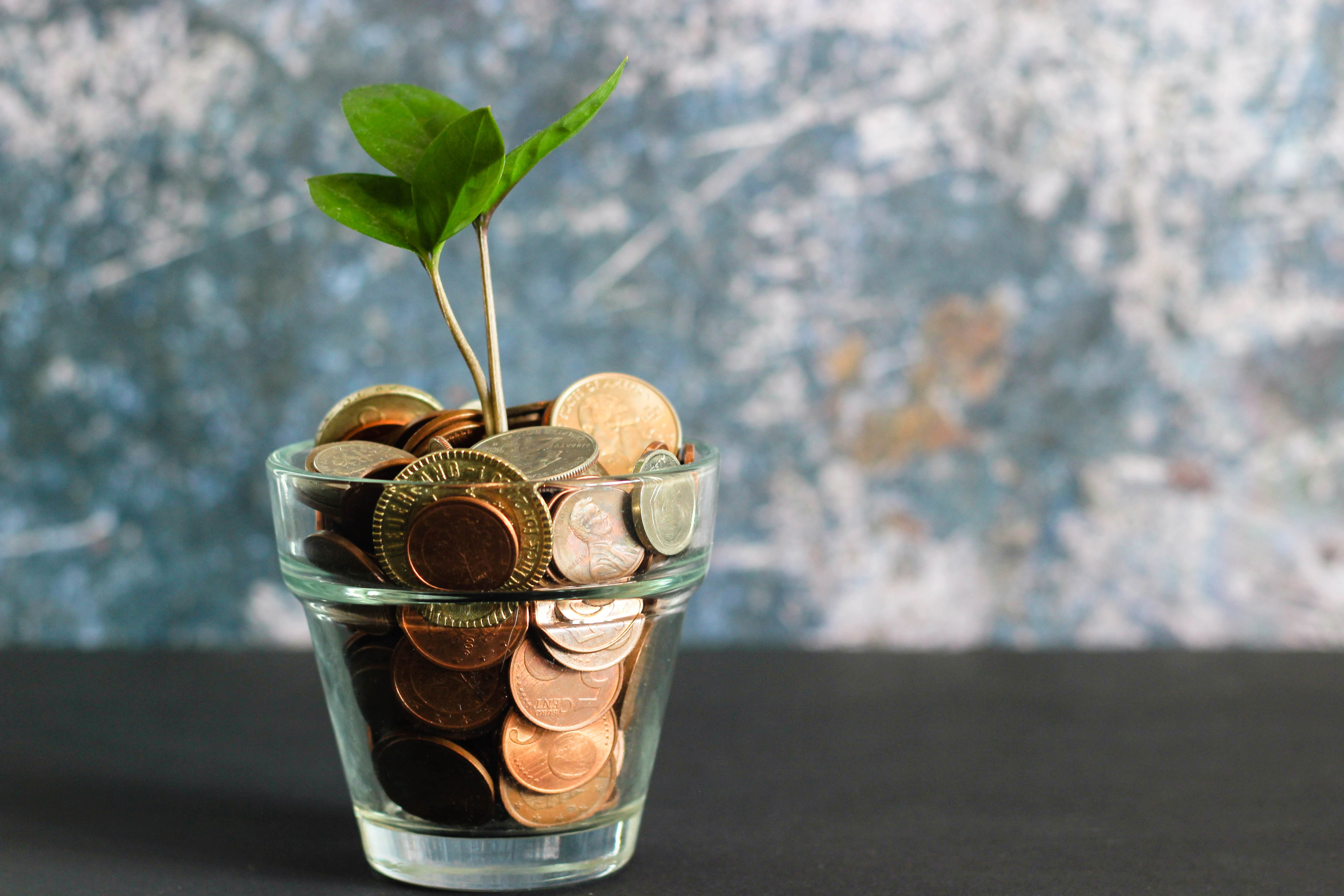 Transparent glass filled with bronze coins and a young plant growing out of it