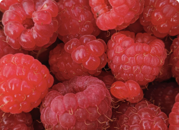 Extreme close up of Raspberries