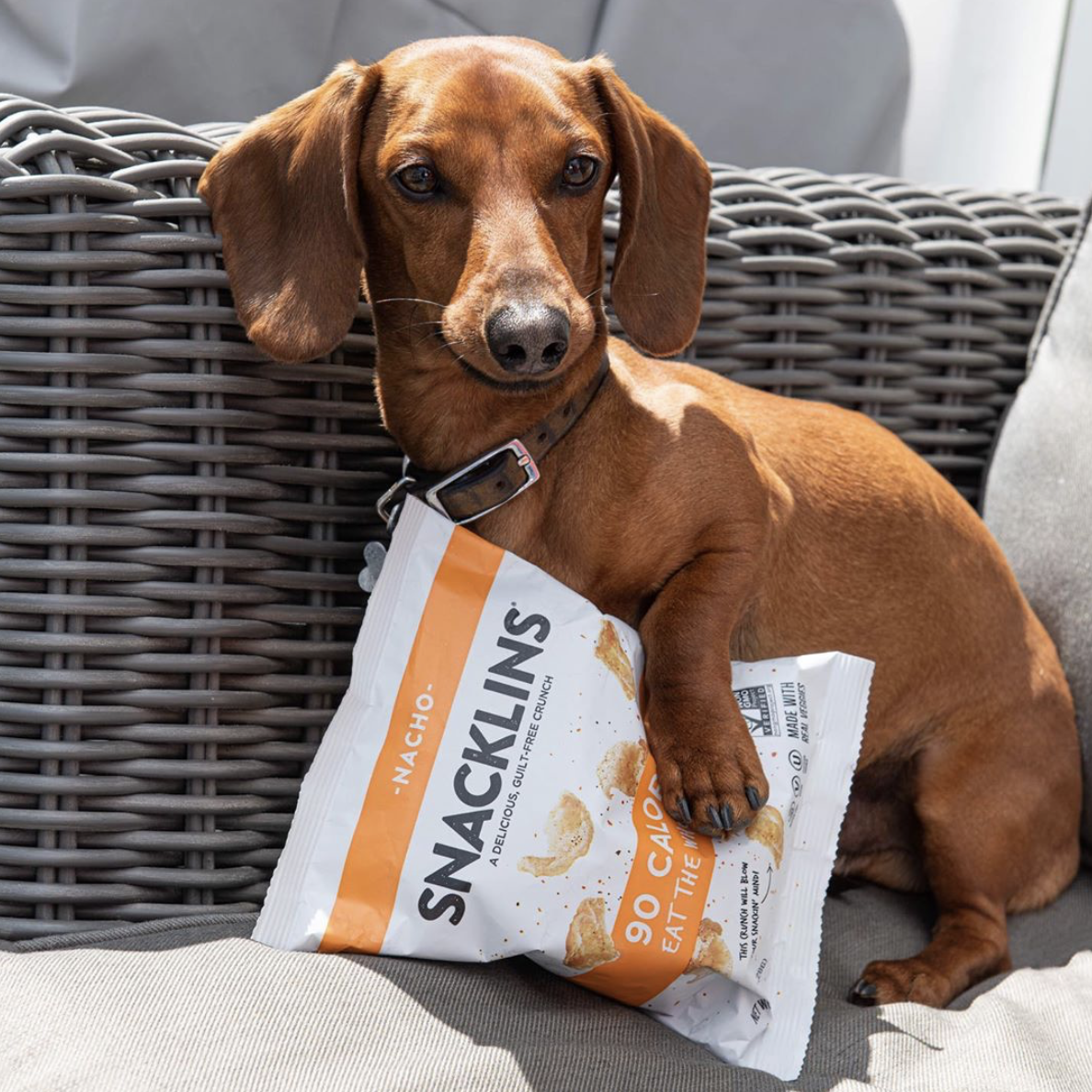 Are Snacklins good for dogs? We're not sure but who could say no to this boy?